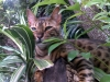 cats-0314-768x1024