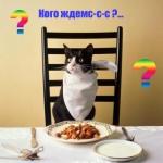 Питание кошек — общие понятия