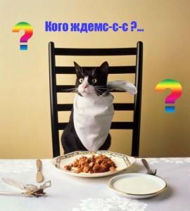 Питание кошек - общие понятия