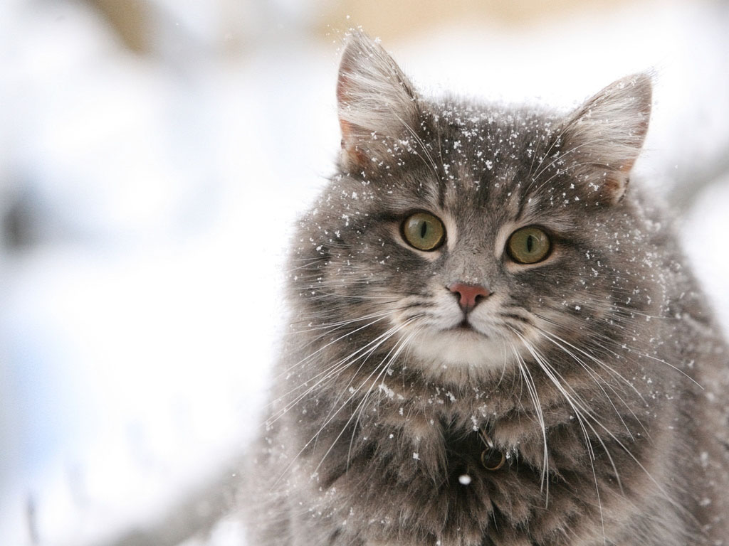 Характер домашней кошки