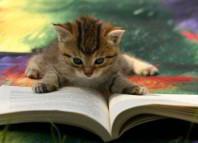 любопытные заметки про кошек