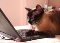 блоги о кошках