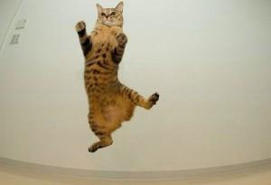 Как кошка падает с высоты
