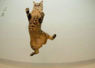 кошачьи прыжки