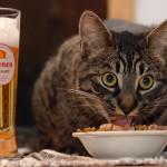 Как отучить кошку от искусственных кормов?
