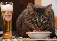 как отучить кошку от искусственного корма