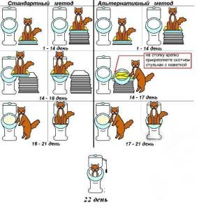 процесс приучения кота к унитазу