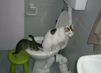кошка на унитазе