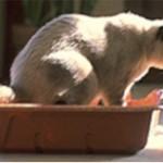 У кошки понос, что делать?