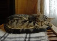 cystitis-cats