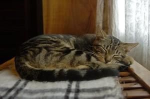 Цистит у кошки – лечение