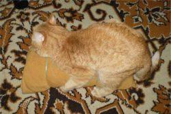 Искусственная кошка для домашнего кота