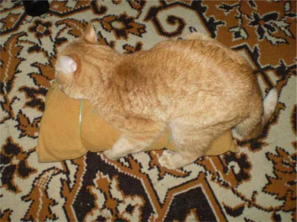 искусственная кошка для кота