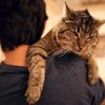 Мочекаменная болезнь у кошек – лечение