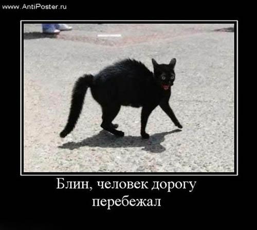 И суеверия если дома черный кот
