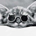 У кошки гноятся глаза – что делать?!