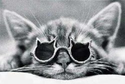 У кошки гноятся глаза – что делать?