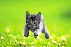 Как ухаживать за маленьким котенком
