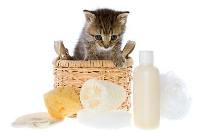 гигиенические процедуры для котенка