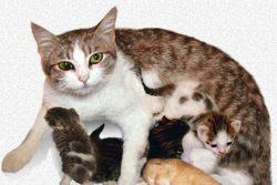 Как помочь кошке при родах?