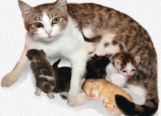 cat-gives-birth