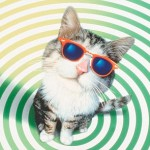 Какие цвета видят кошки?