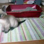Чем лечить понос у котенка — советы и рекомендации