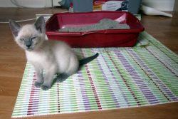 Чем лечить понос у котенка: советы и рекомендации