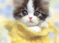 kitten-home