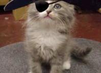 kitten-pirate