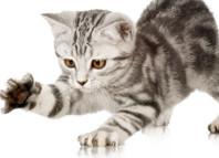 надо отучать котят царапаться в детстве