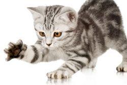 Как отучить котенка кусаться и царапаться — 10 советов