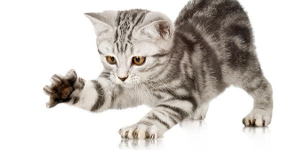 Как отучить котенка кусаться и царапаться — 10 советов | Кот Обормот