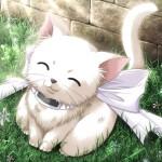 Белые кошки: аристократки до кончиков лап