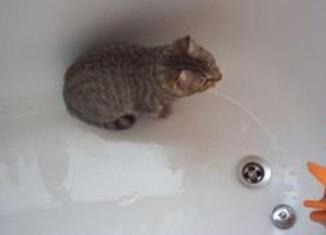 как помыть котенка