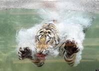 кошки боятся воды