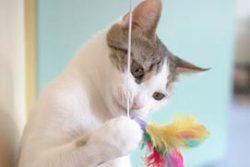 Игрушки для кошки — чем порадовать своего любимца?
