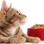 Сухой корм для кошек отзывы, рекомендации. Обзор популярных марок