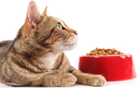 Сухой корм для кошек обзор