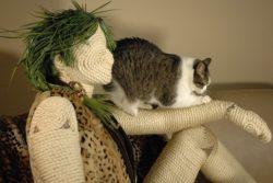 Когтеточка для кошки: как её выбрать или сделать самостоятельно