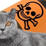 Как лечить кошку от отравления? Советы ветеринара.