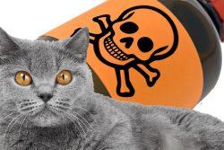 Как лечить кошку от отравления? Советы ветеринара