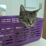 Пиелонефрит у кошки: симптомы, лечение и профилактика