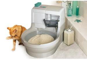 Туалет для кошек - какой лучше выбрать? Обзор, советы и рекомендации