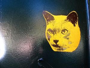 Гепатит у кошки: причины, симптомы и лечение