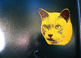 гепатит у кошек: причины, симптомы и лечение