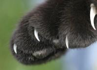 удаление когтей у кошки за и против