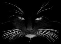 у кошки выпадают усы