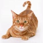 Эпилепсия у кошек: причины, симптомы и лечение