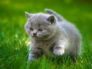 Аскариды у кошек: симптомы и лечение